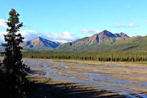 Denali National Park: wetlands, tiaga and the Alaska Range